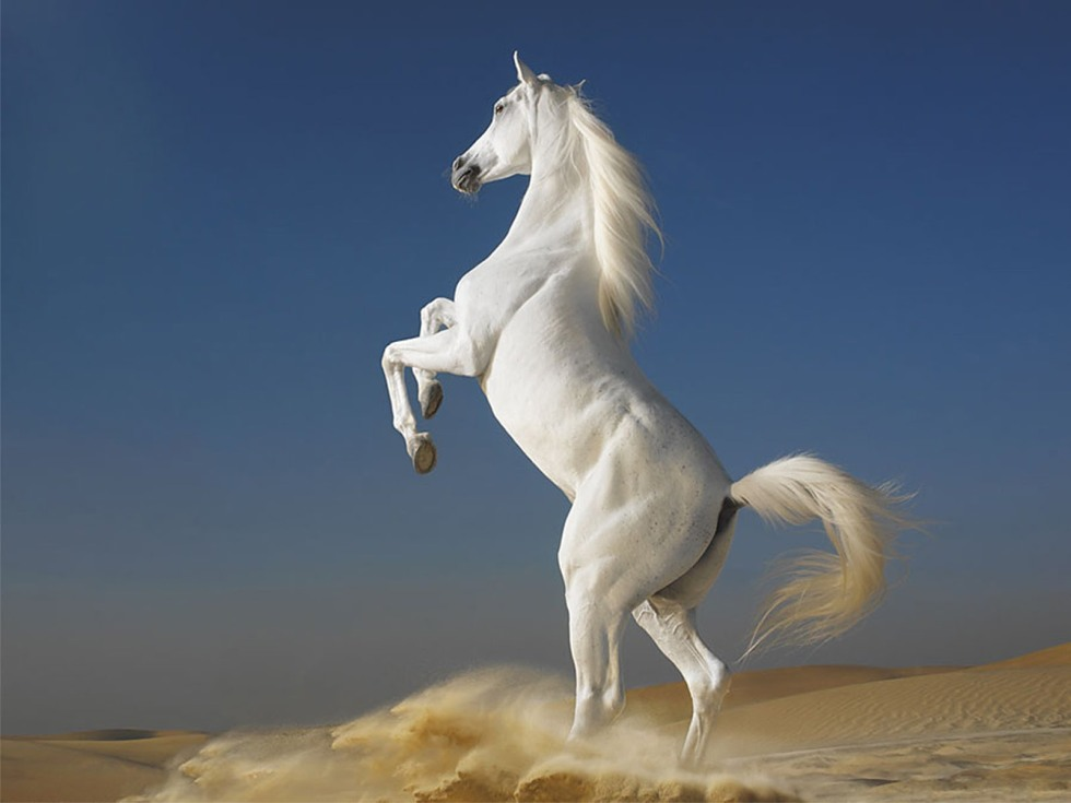 White_Horse_-_best_computer_backgrounds