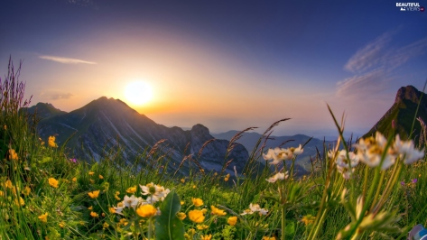 sunrise-spring-mountains-flowers-meadow